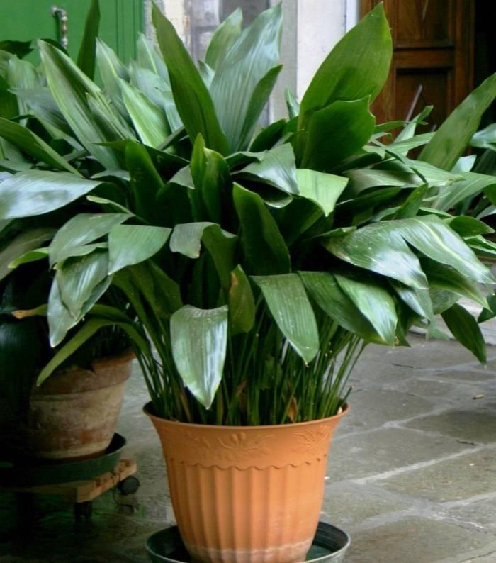 گیاه مناسب برای حمام و سرویس بهداشتی - کاماپرس